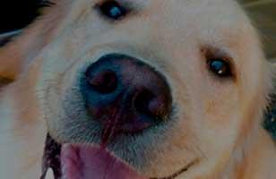 Perro Contento, La Pólvora Y Los Animales